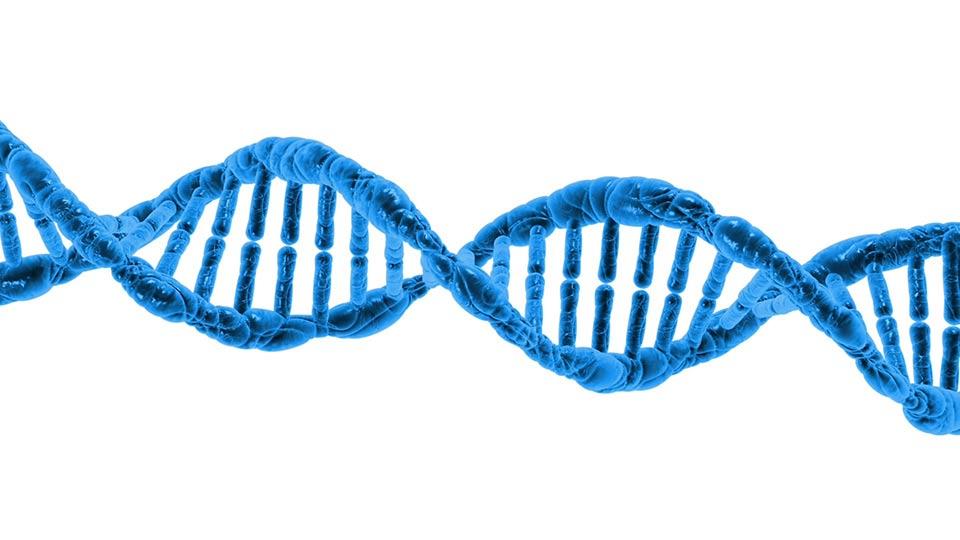 Das Protein RAGE repariert Gewebeschäden.