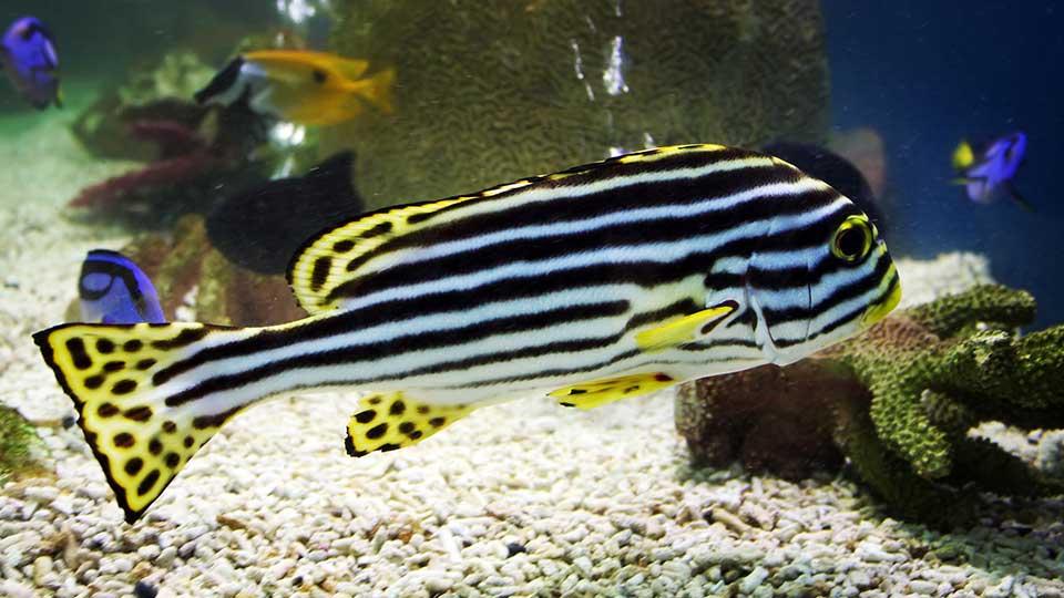 Zebrafisch, Rückenmark