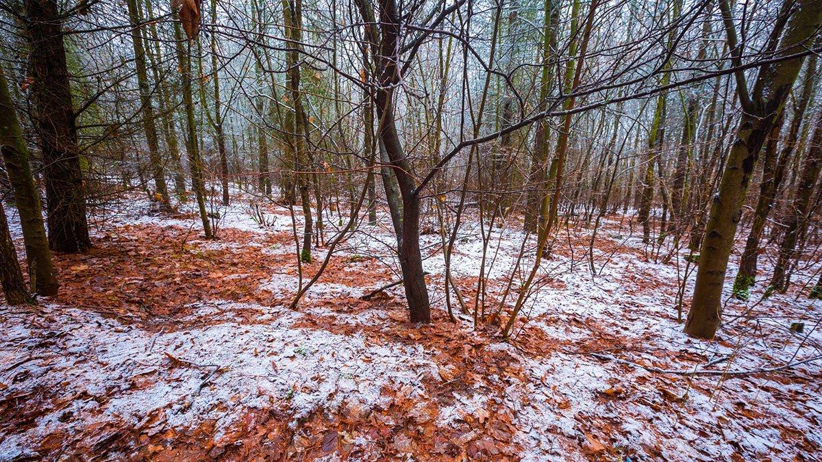 Wald (Symbolbild)